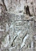 Demetri, Dan and Alicia's Tree
